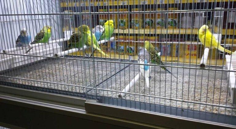 Vendita uccelli