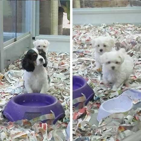 Cuccioli in vendita