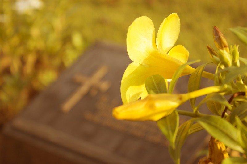 un fiore giallo accanto una lapide con una croce