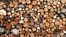 legname, tronchi