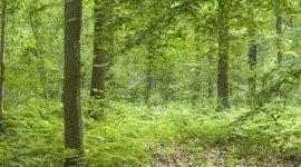 commercio legname, taglio piante