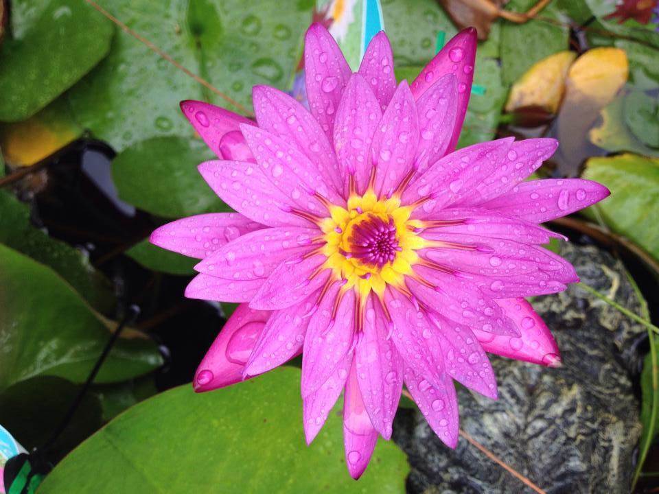 Plant Nursery, Redlands, QLD