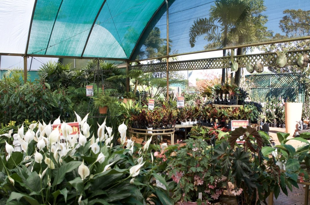 shade loving indoor plants for sale