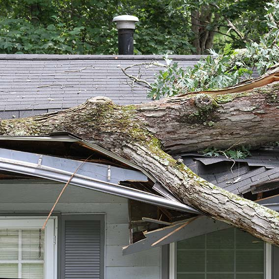 tree smashed into roof