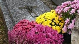 tumulazione, esumazioni, disbrigo pratiche funerarie