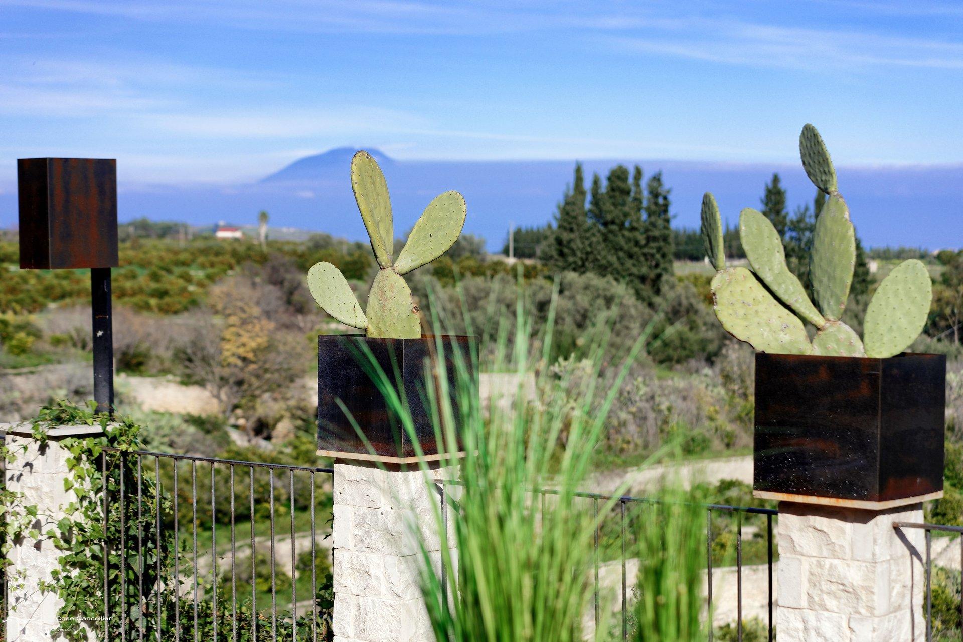 Terrazza con piante di cactus
