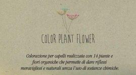 color plant flower