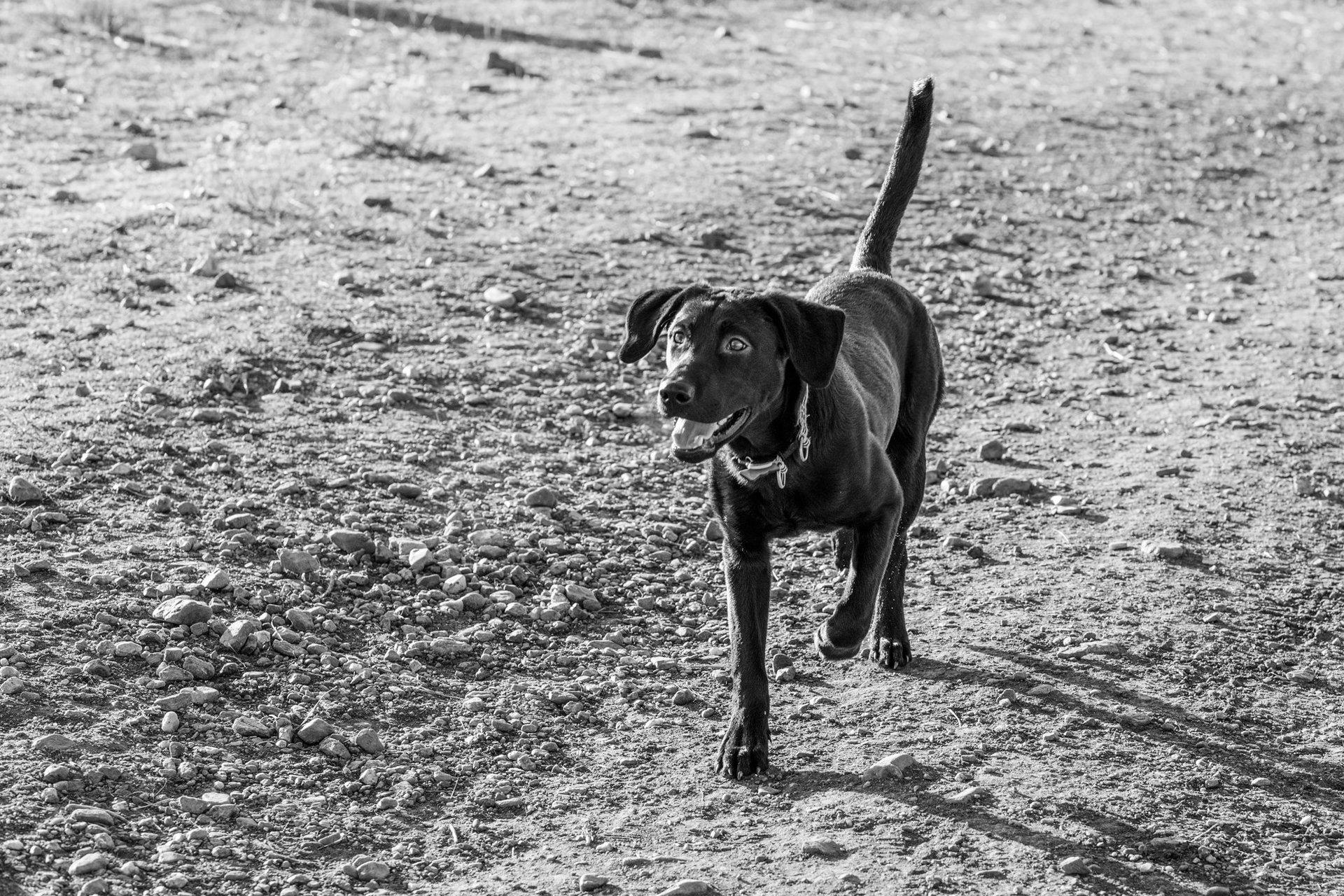 Dog Training Boarding School Denver Co