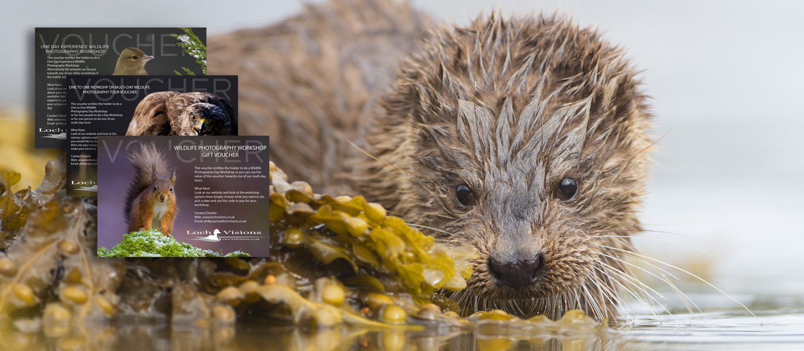 Otter wildlife photography workshop gift voucher