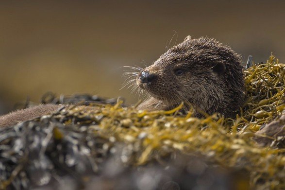 Scottish Otter Wildlife Photography Workshop
