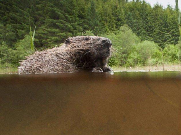 Beaver photography tour