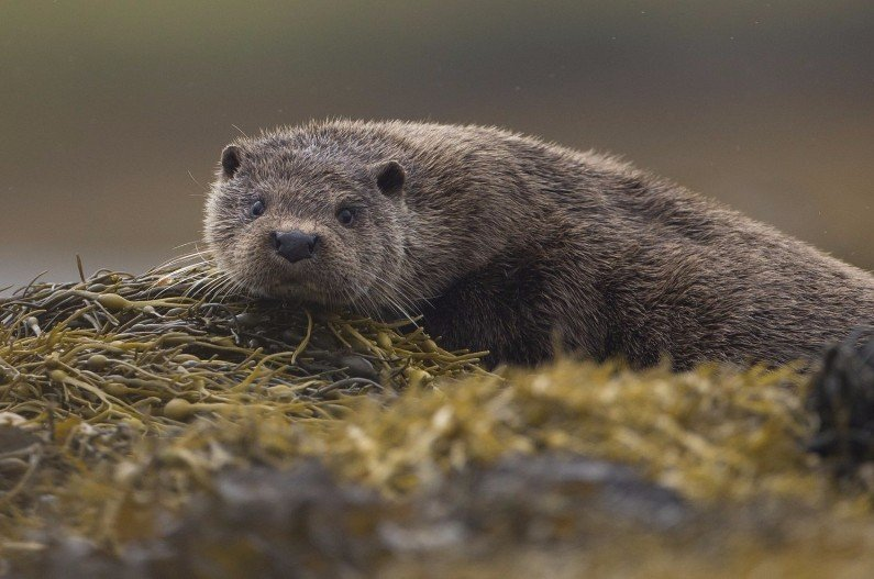 Otter photography tour