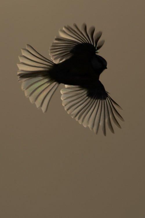 bird photography wildlife photography workshop