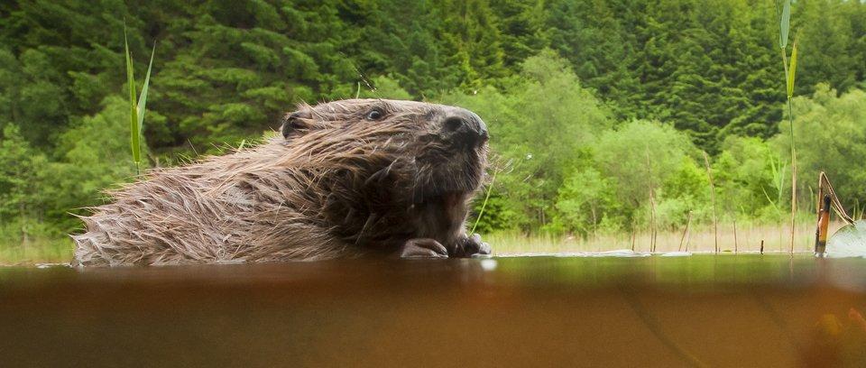 Beaver Photography Workshop