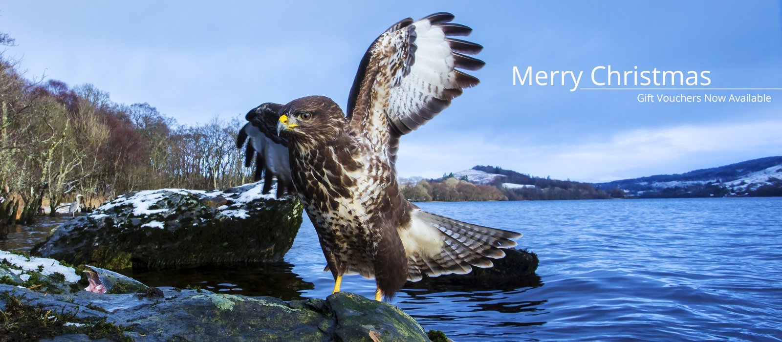 Scottish wildlife photography workshop gift vouchers
