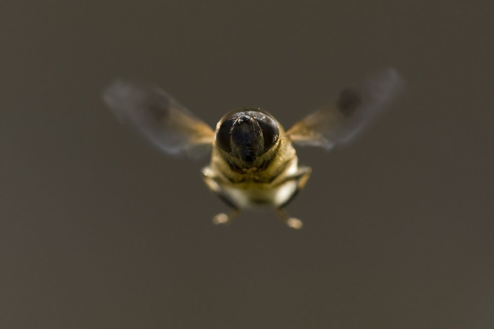 forest bird flight masterclass wildlife photography