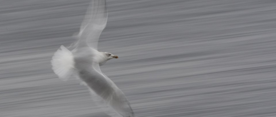 creative slow shutter wildlife photography workshop
