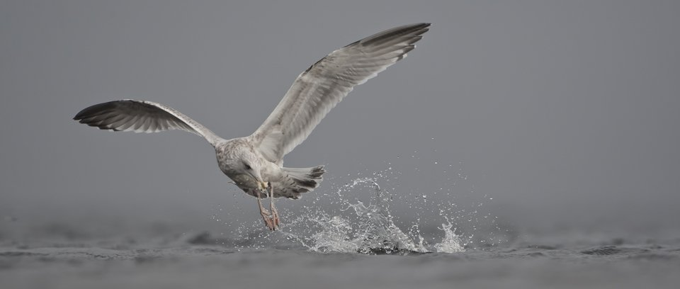 sea bird flight masterclass wildlife photography workshop