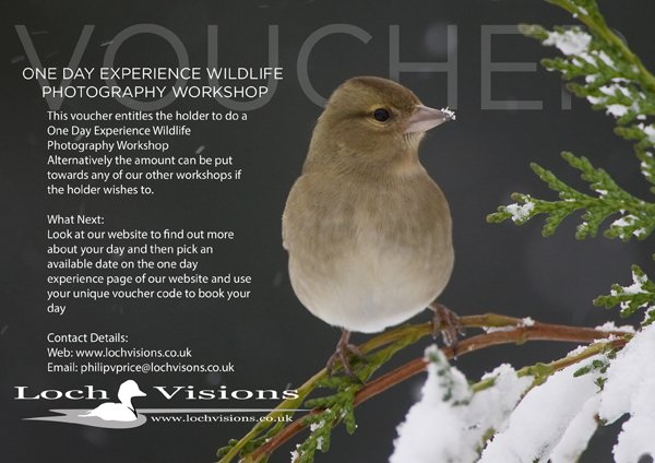 One day wildlife photography experience voucher