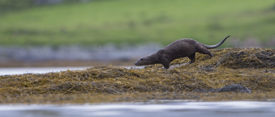 Otter Photography Workshop