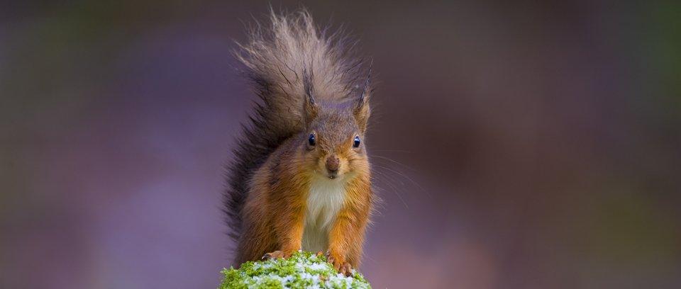 Red Squirrel wildlife photography workshop