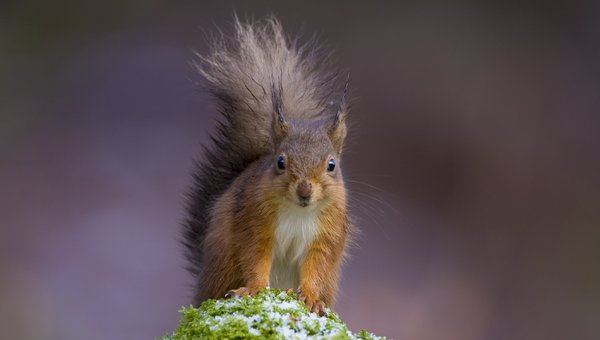 Red Squirrel winter photography tour