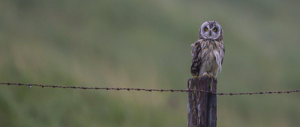 Mull wildlife photography tour