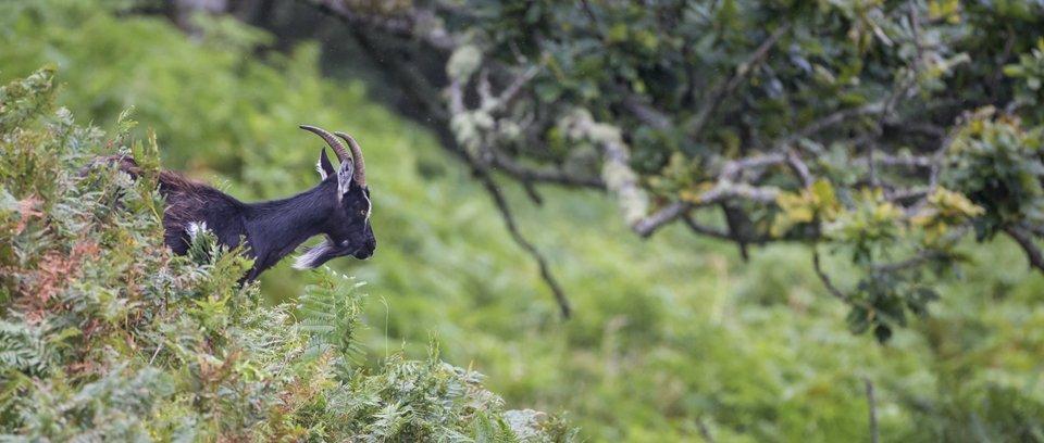 wild goat wildlife photography workshops