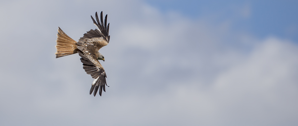 Red Kite Photography Tour