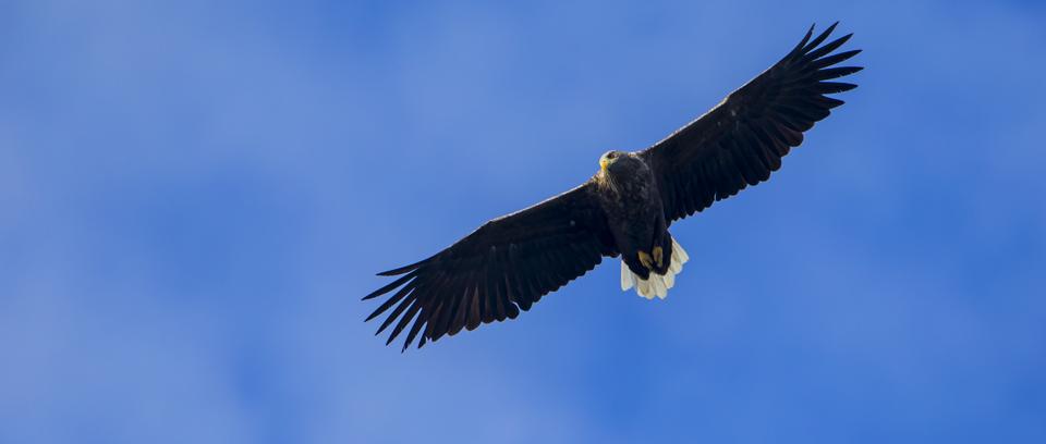 Sea Eagle Photography Workshop