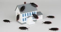derattizzazioni, disinfestazioni formiche, trattamenti pavimenti marmo