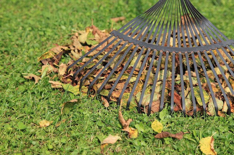 Seasonal Yard Clean Up Service | Orchid Lawn Care