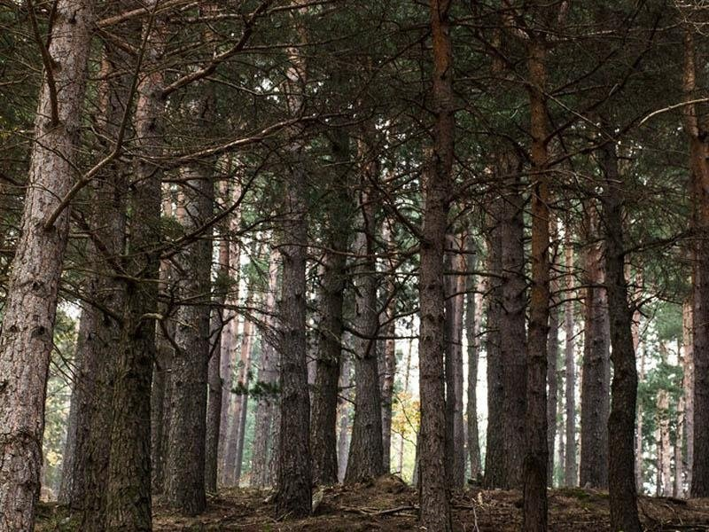 bosco dell