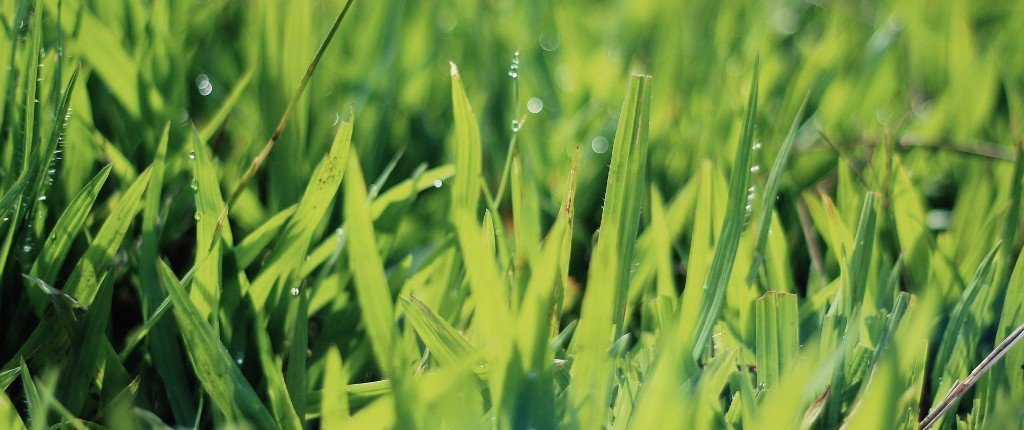 A Lawn with Dew