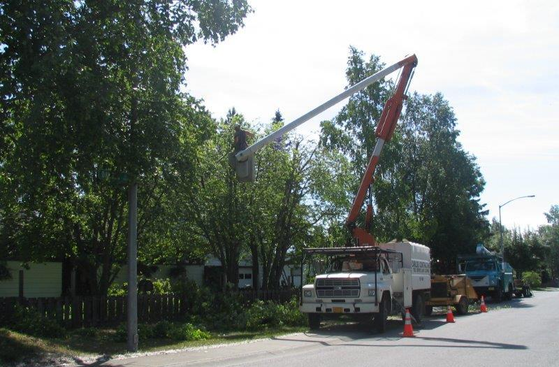 Man calling for tree work in Anchorage, AK