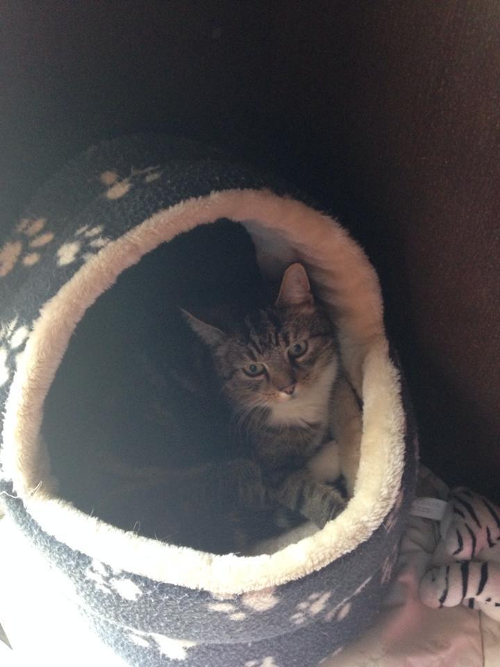 A cat in a fleece bed