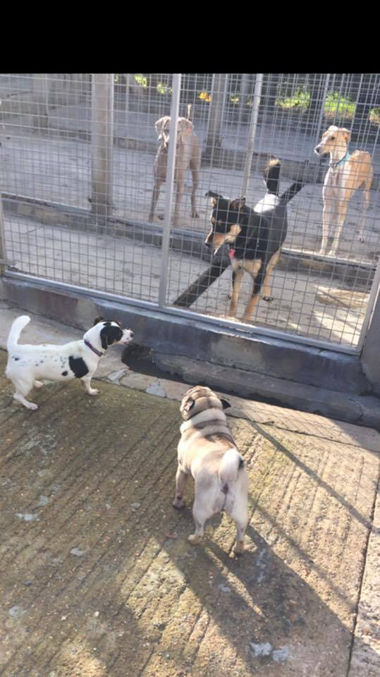 Dogs facing each other through a wire fence