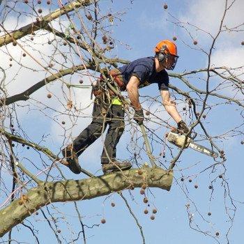 tree surgeon