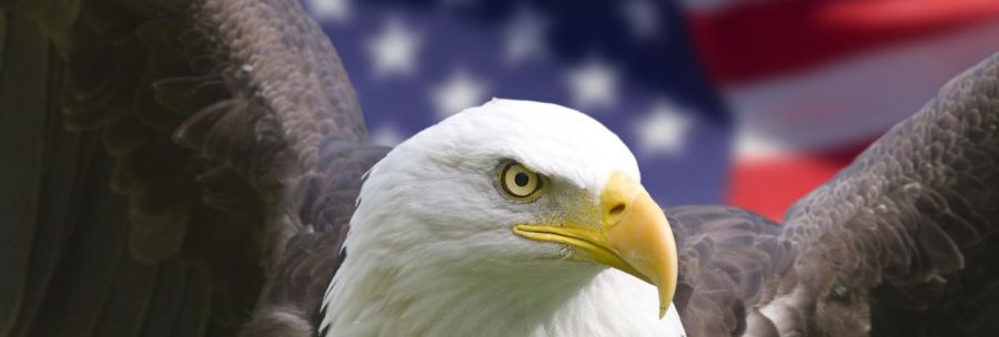 Close u of bald eagle and american flag