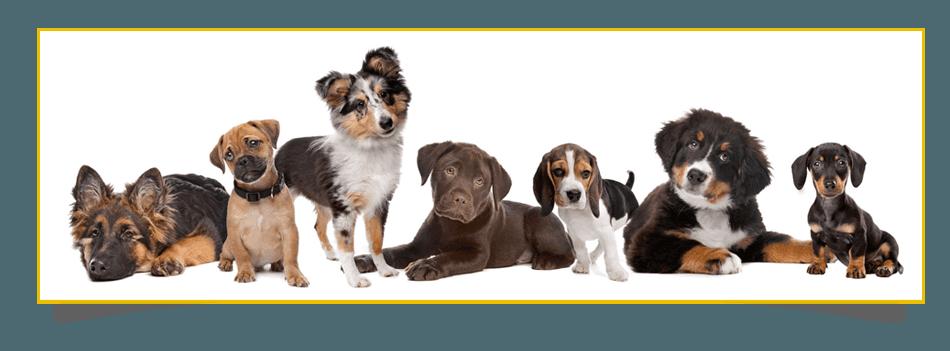cut dogs