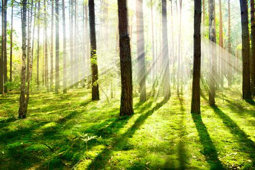 Raggi del sole, attraversando gli alberi