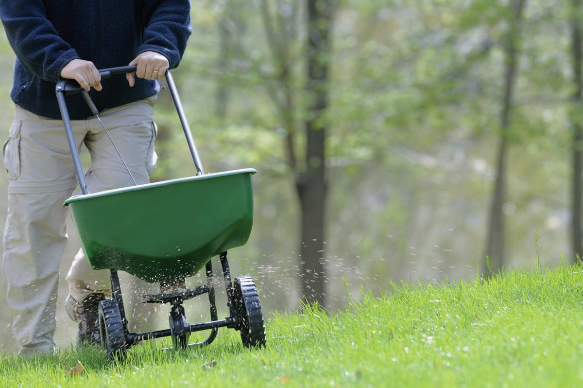 Manual fertilizing of the lawn