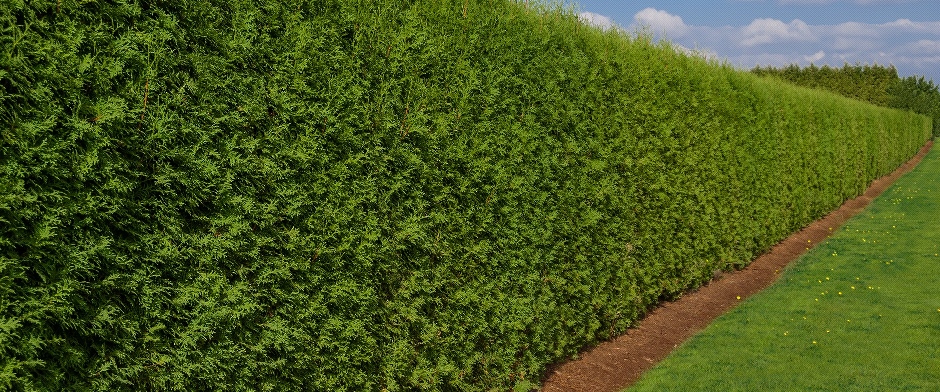 hedge cutting experts in high wycombe. Black Bedroom Furniture Sets. Home Design Ideas