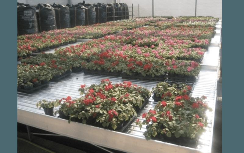 Поддоны для демонстрации растений