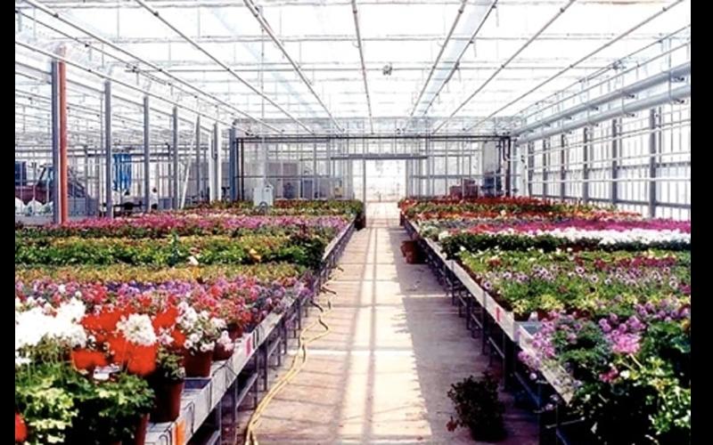 Поддоны для растений и цветов