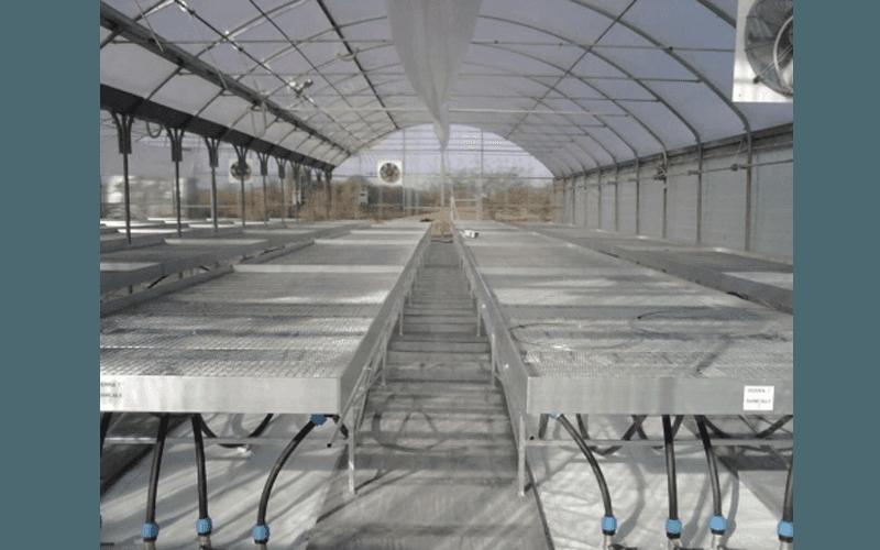 Поддоны для культивирования растений