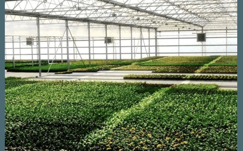 Поддоны для растений