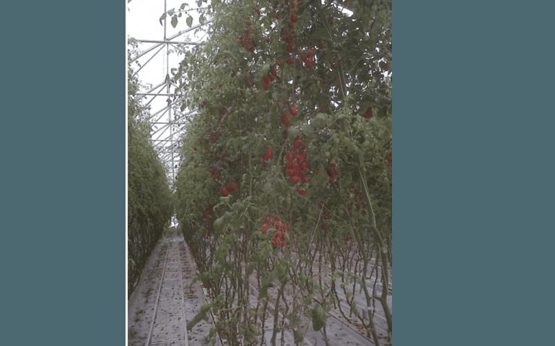 Crop systems' design