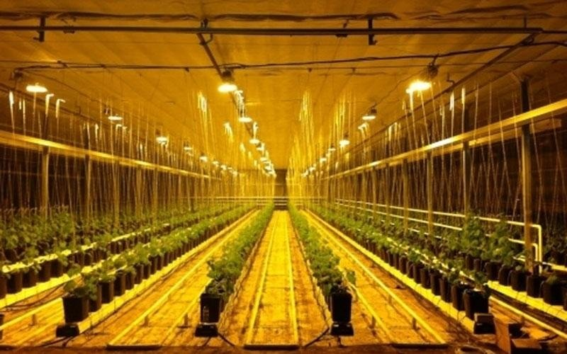 Решения для сельского хозяйства