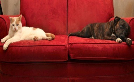 A cat and dog sitting on a couch